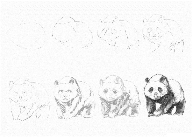 Рисовать картинки поэтапно карандашом красивые