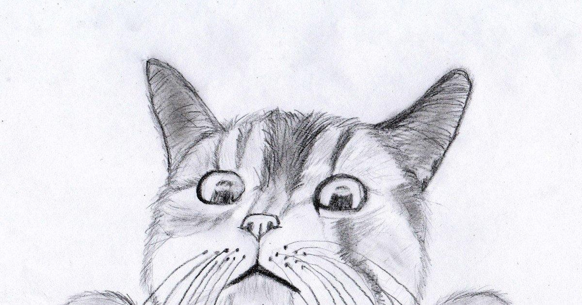 картинки кошки карандашом легко рисовать новосибирска карте города