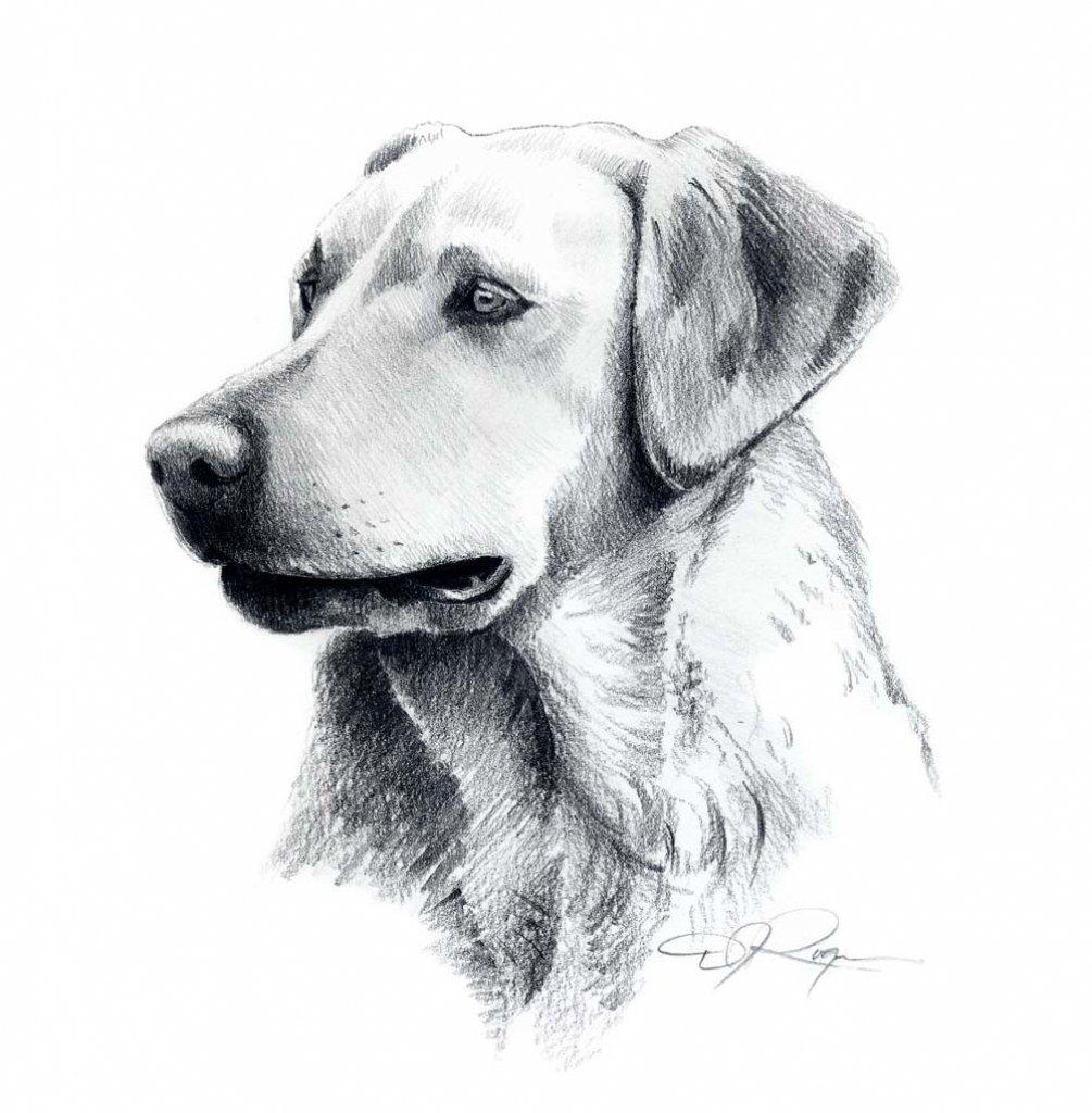 каждом рисунки карандашом не сложные но красивые собаки его помощью легко