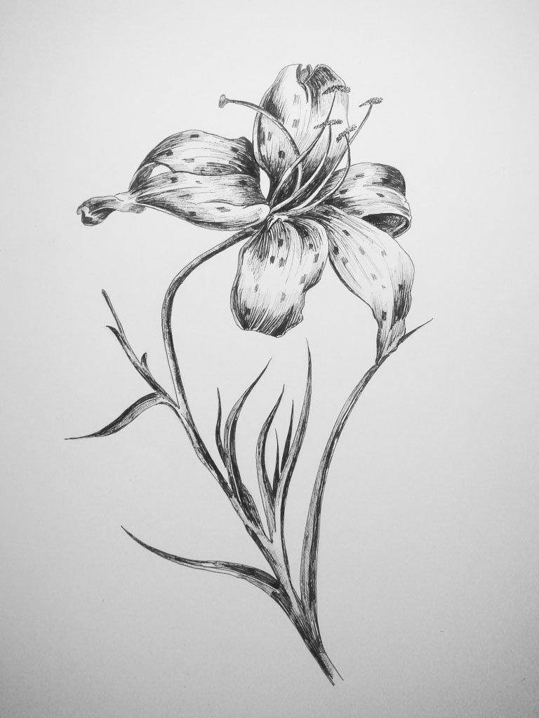 Эскизы карандашом картинки