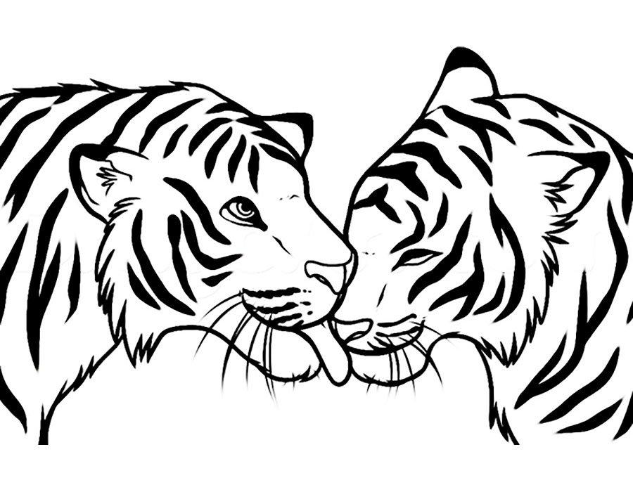 Прекрасны, картинки тигра для срисовки