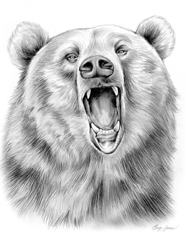Всех, рисунки картинки медведя