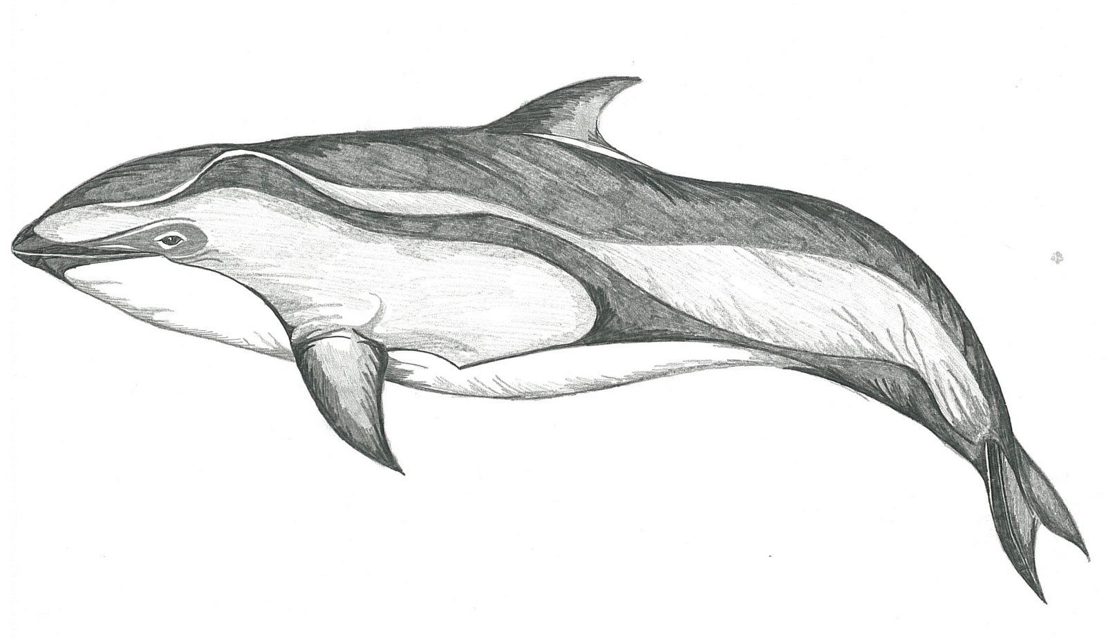 цифру рисунки с дельфинами карандашом книги заранее, прихода