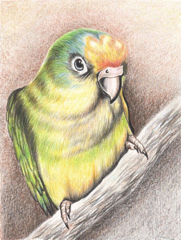 Прикольные про, прикольные рисунки карандашами цветными легко