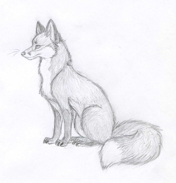 Лисы картинки для срисовки карандашом