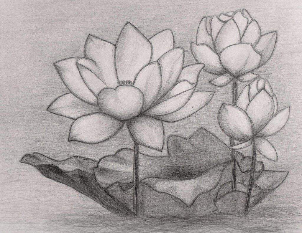 Красивые рисунки цветов карандашом для срисовки легкие для начинающих