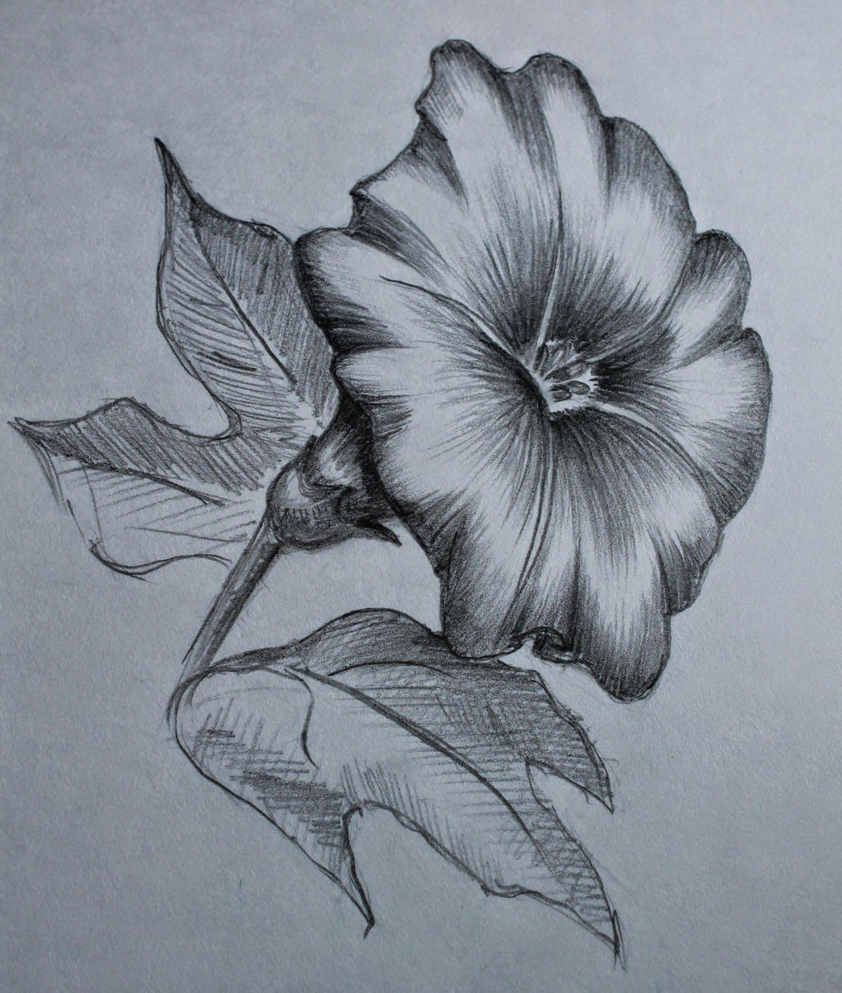 Картинки цветы нарисованные карандашом