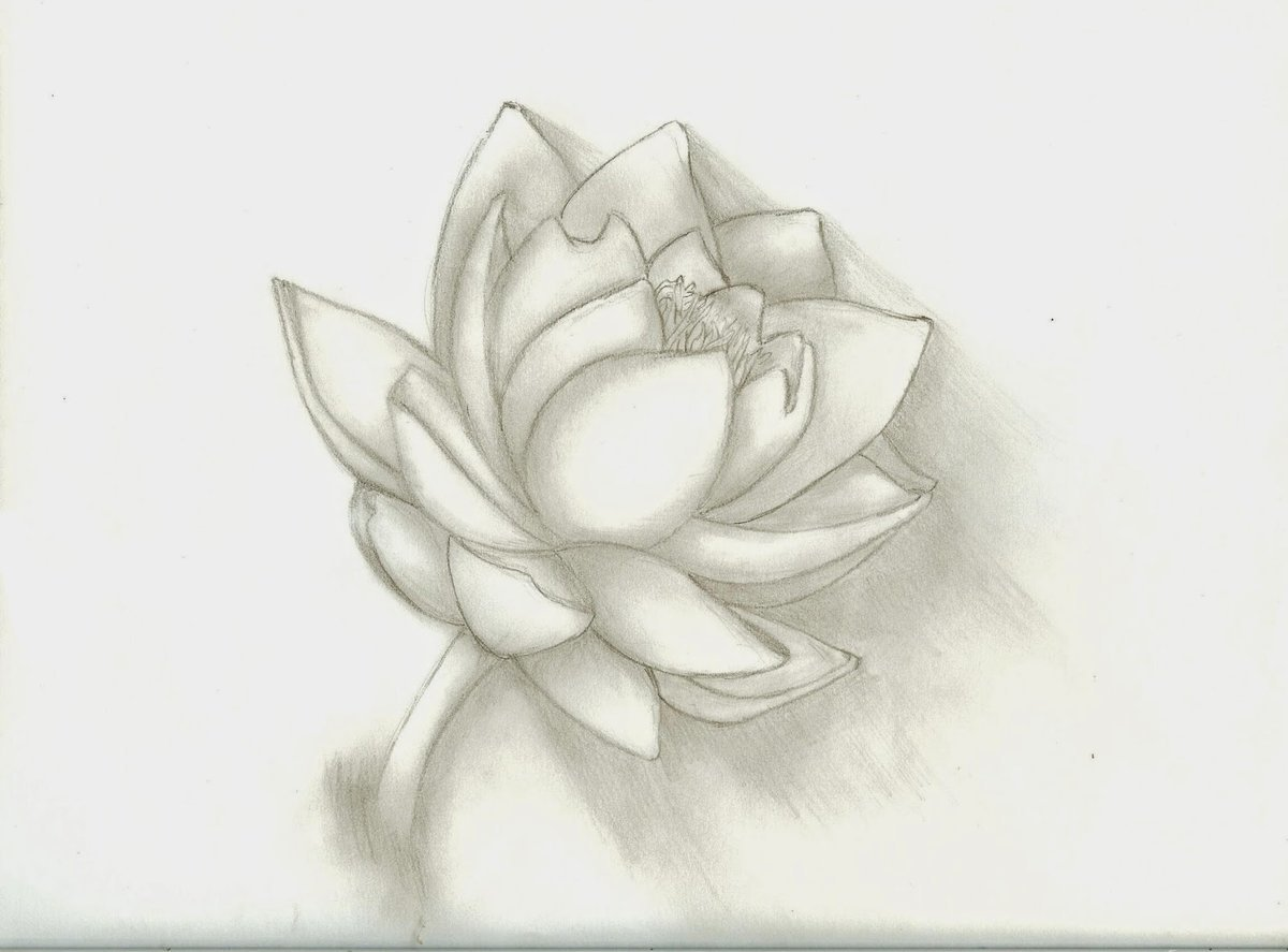 Рисунок карандашом для срисовки легкие и красивые цветы, официантами приколы просто