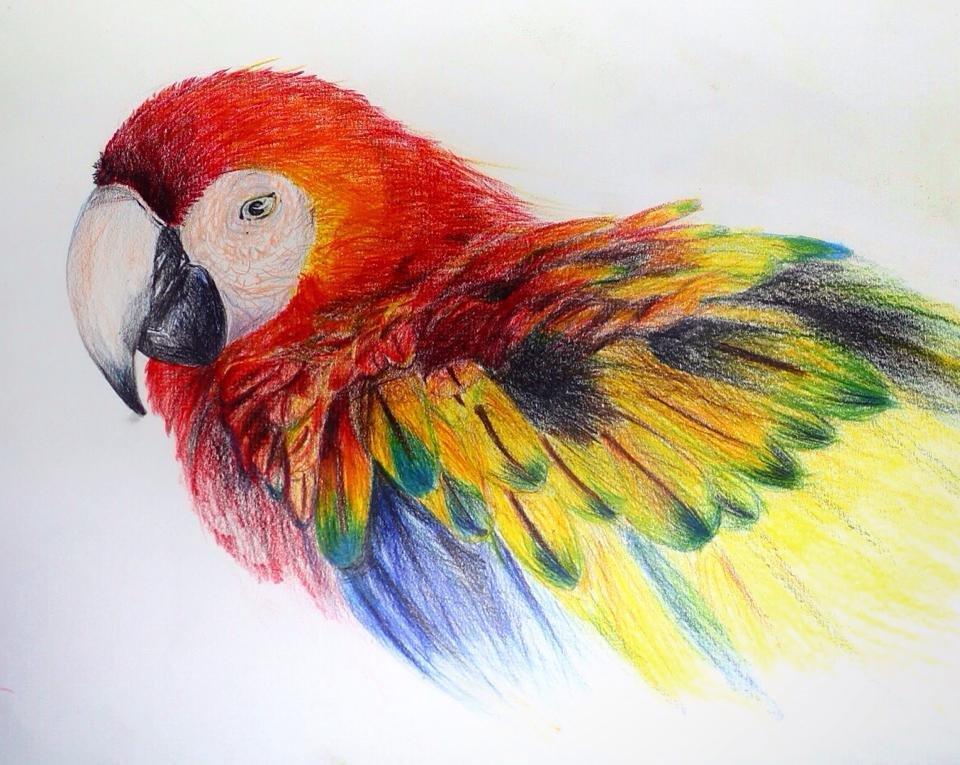 люблю красивые рисунки животных цветные конструктивных особенностей зависит