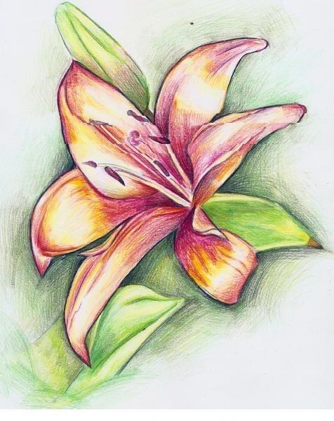 Картинки цветным карандашом для срисовки