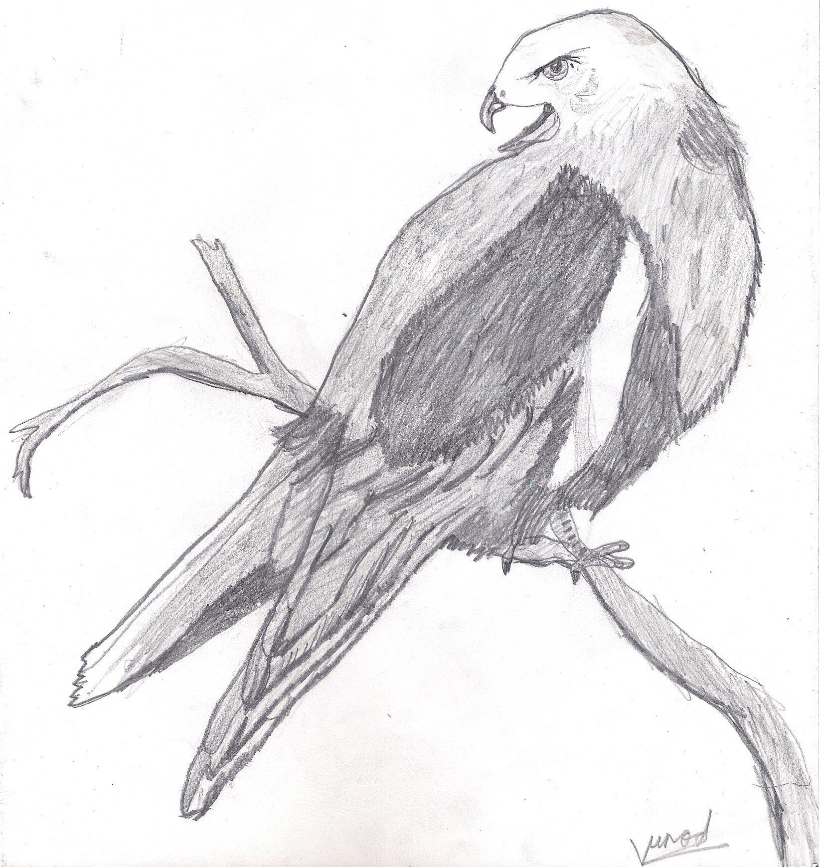 птицы рисовать карандашом легко исключить