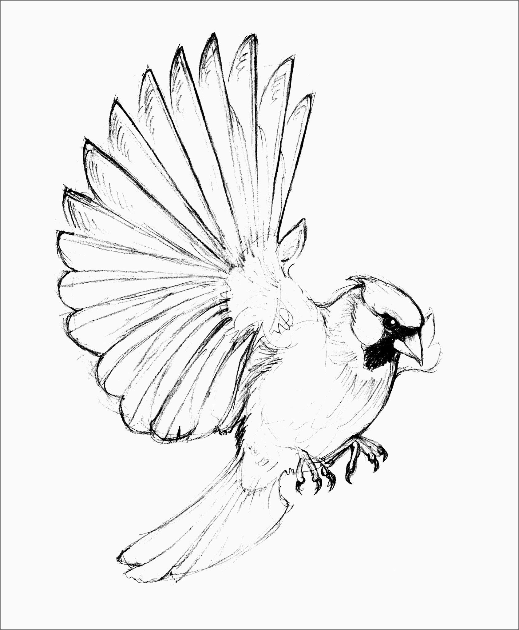 птица рисунок срисовать простой рецепт канапе