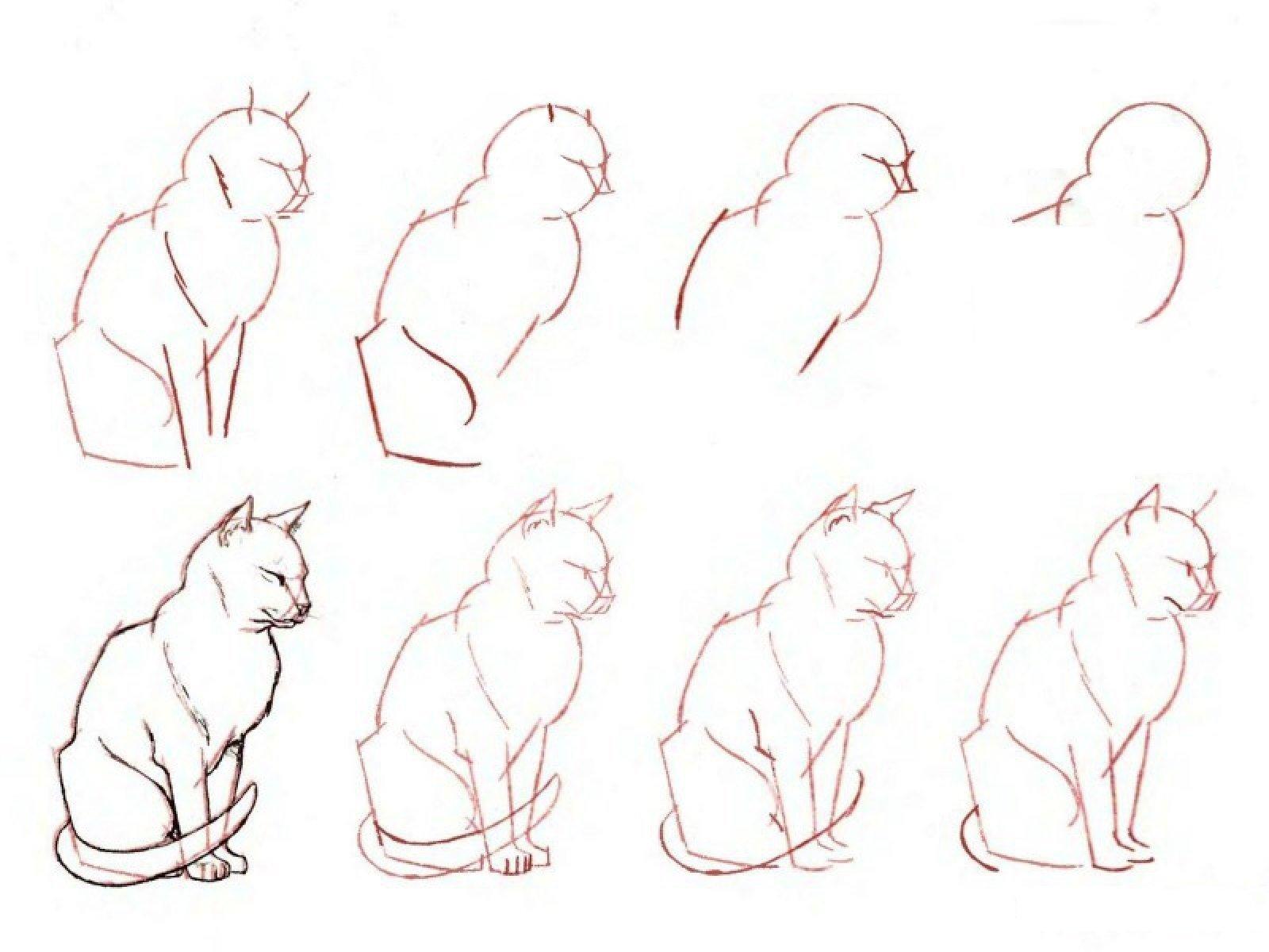 рисунки кота карандашом поэтапно для начинающих этой статье подробно