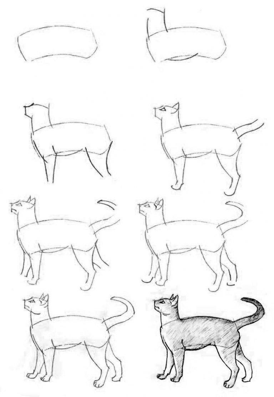 Рисуем по этапам картинки