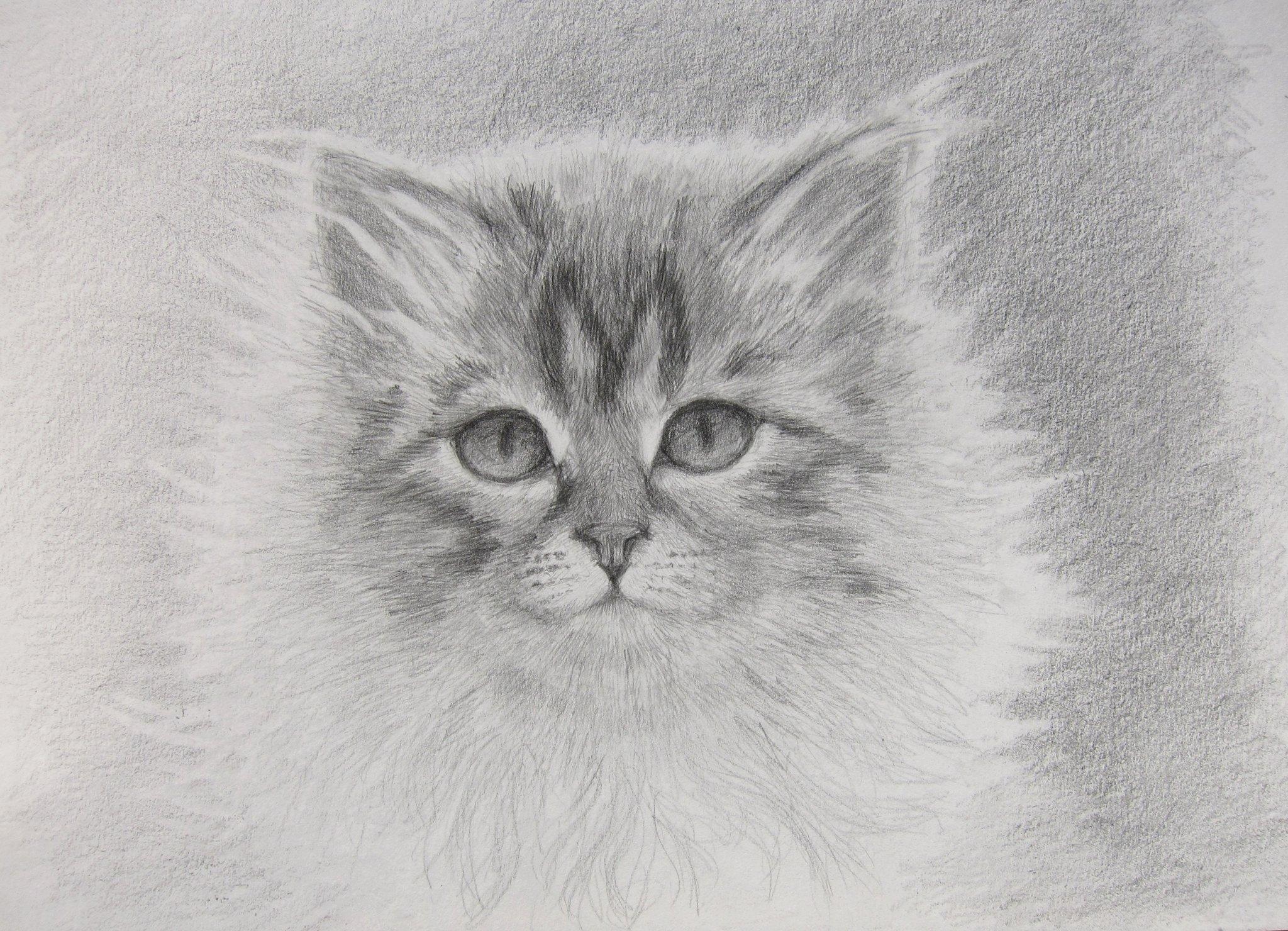 Картинки чтобы порисовать карандашом фото