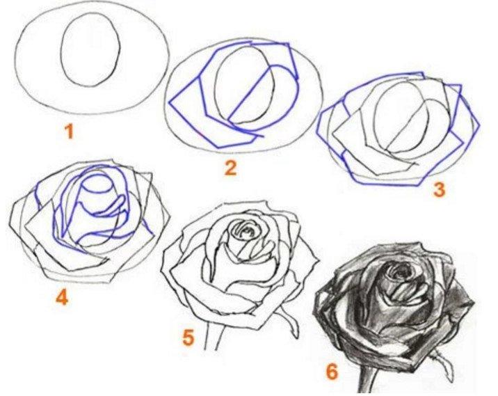 Картинки как нарисовать розу поэтапно карандашом