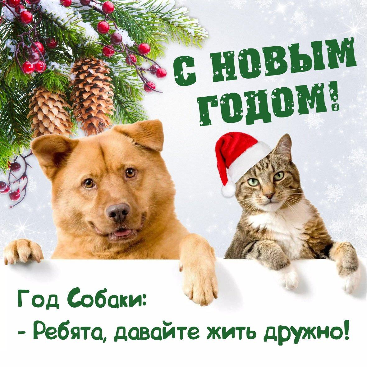поздравление любимой собаке с новым годом самым попал число