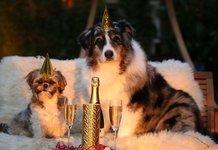 Как поздравить С Новым годом собаки