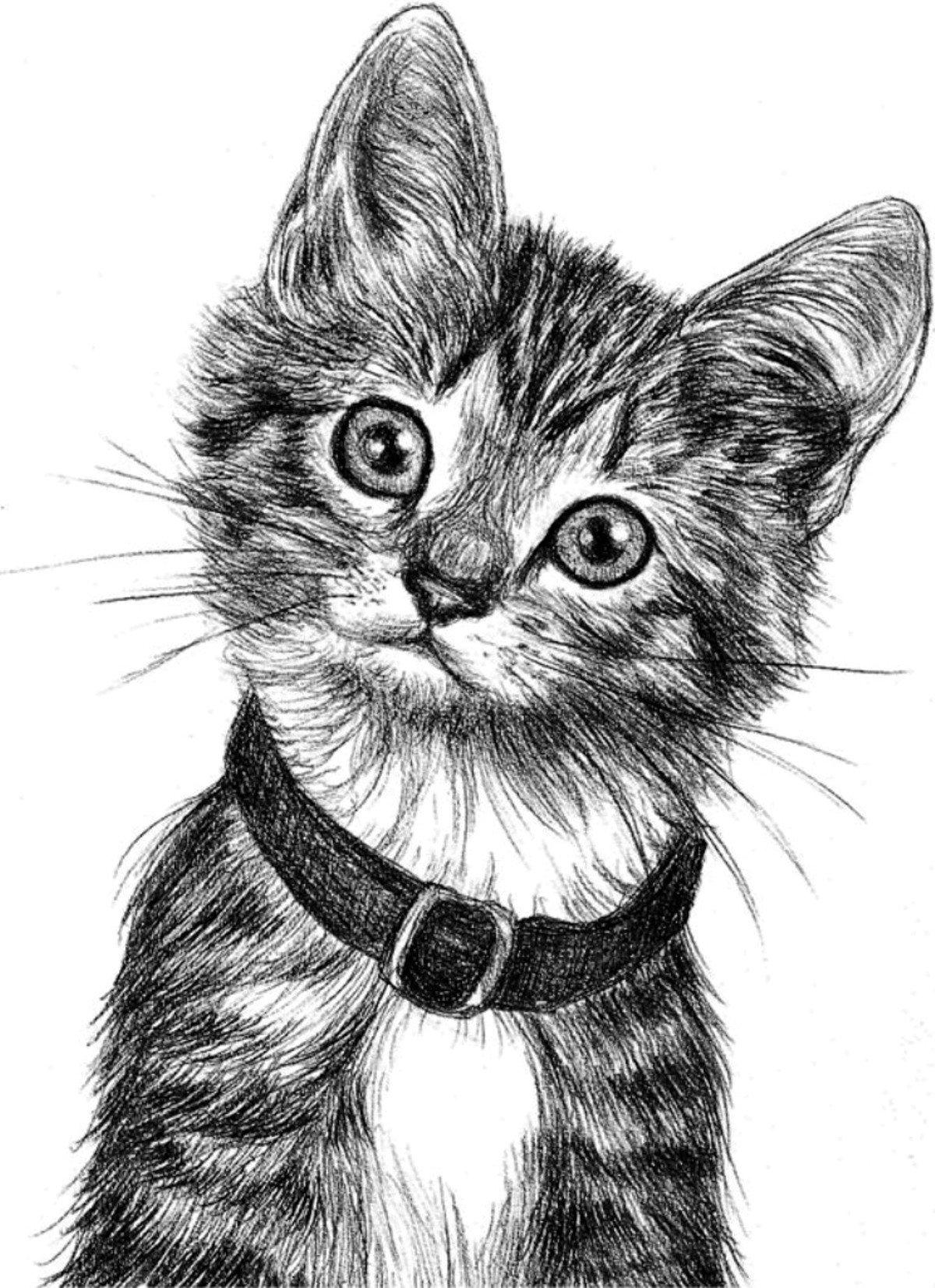 Для, прикольные картинки с животными карандашом
