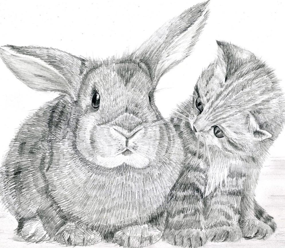 Картинки кролики нарисованы карандашом