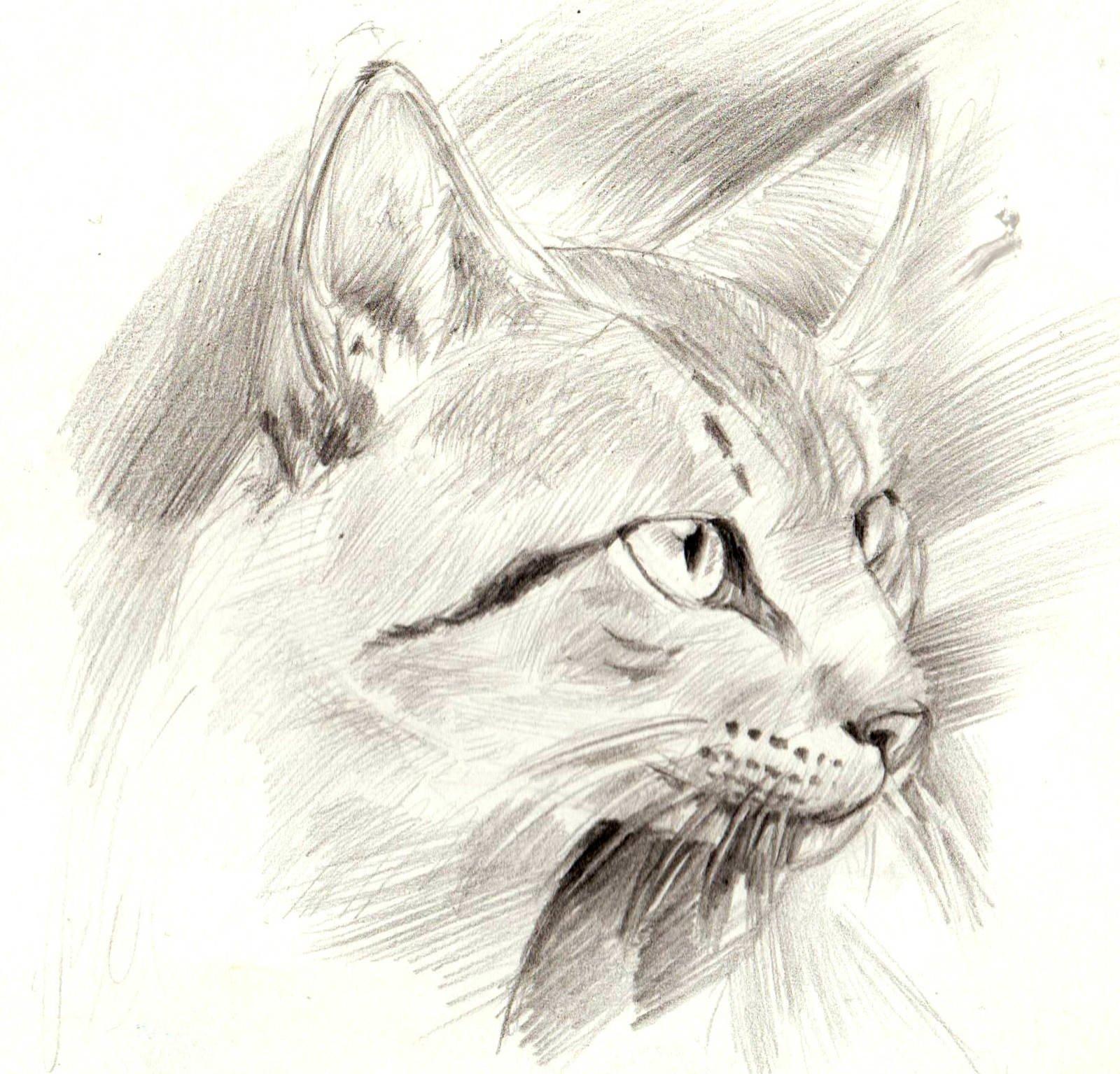Крутые рисунки карандашом коты, любимой прощении