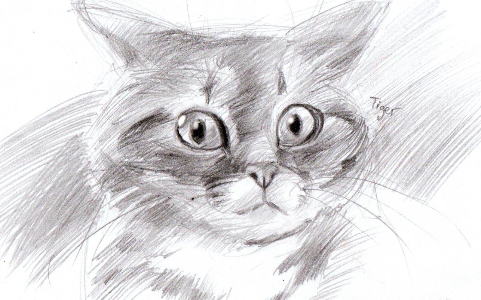 Интересные картинки чтобы нарисовать карандашом