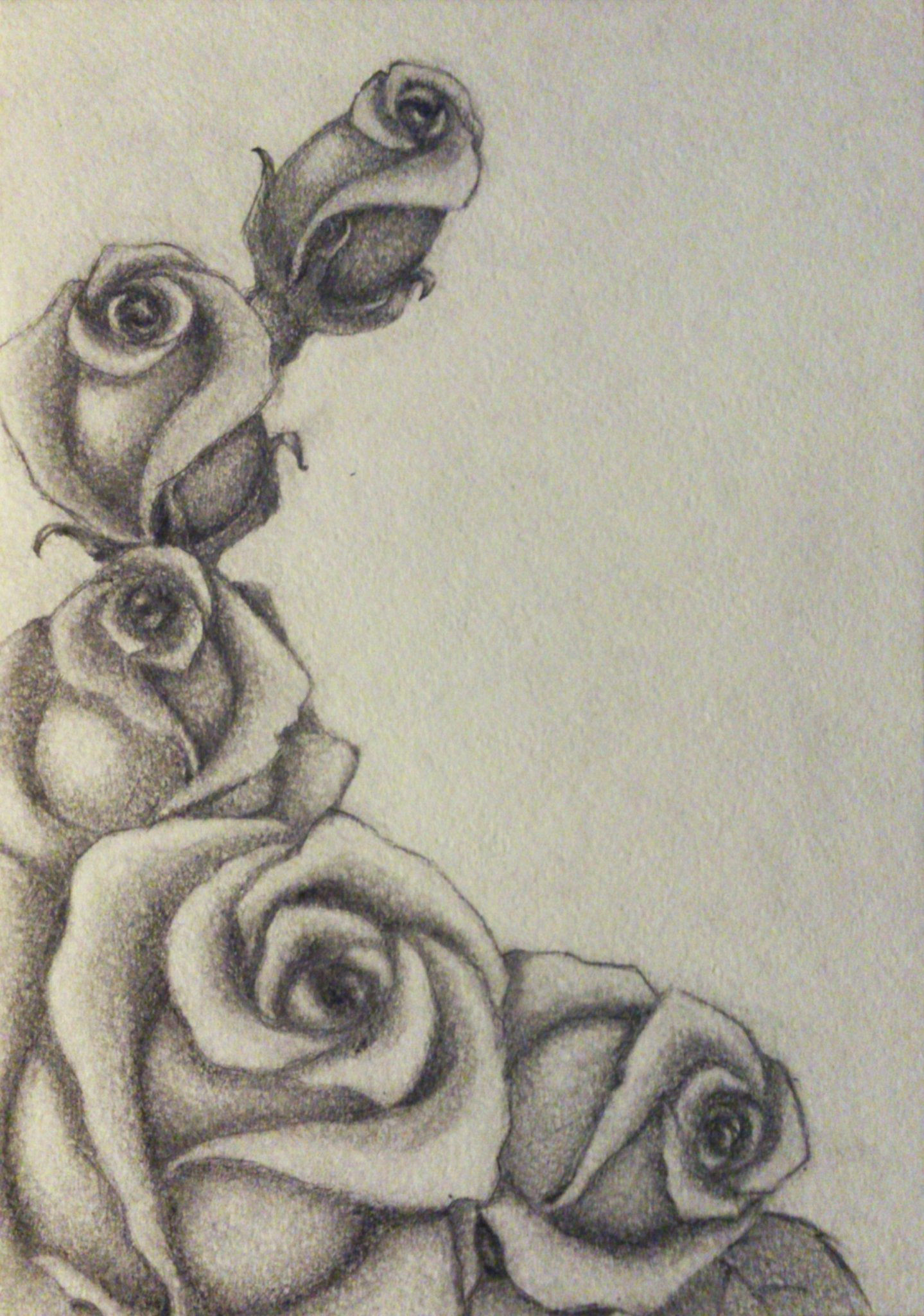 Картинки с розами нарисованные, картинки магистр