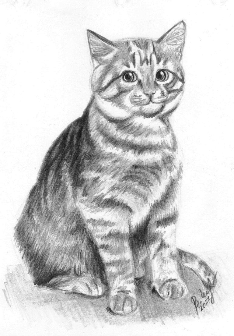 Нарисованный кот карандашом картинки