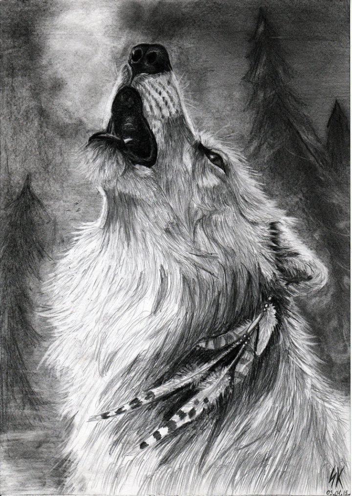 Картинки с волками простым карандашом