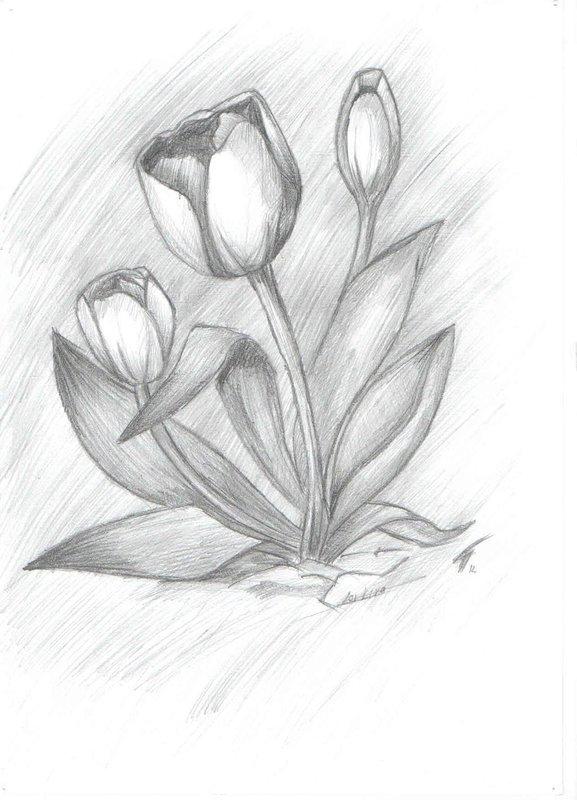 Рисунок карандашом: цветок