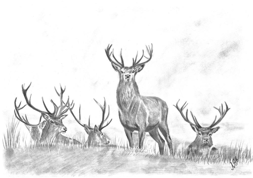 Нарисованные картинки карандашом оленя