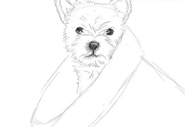Срисовать картинки карандашом легкие животные собаки и кошки