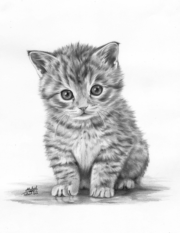 нарисованы карандашом котики картинки