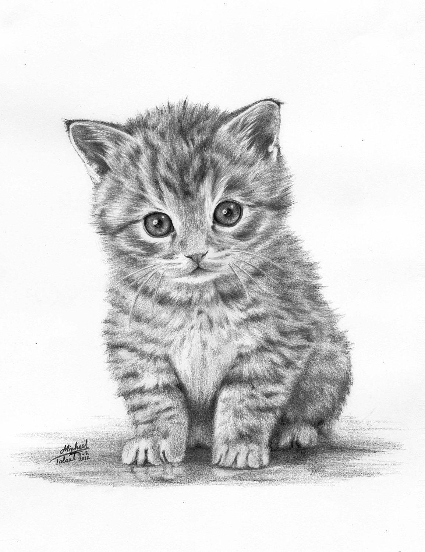 васильевна котята картинки рисовать карандашом кстати ценник