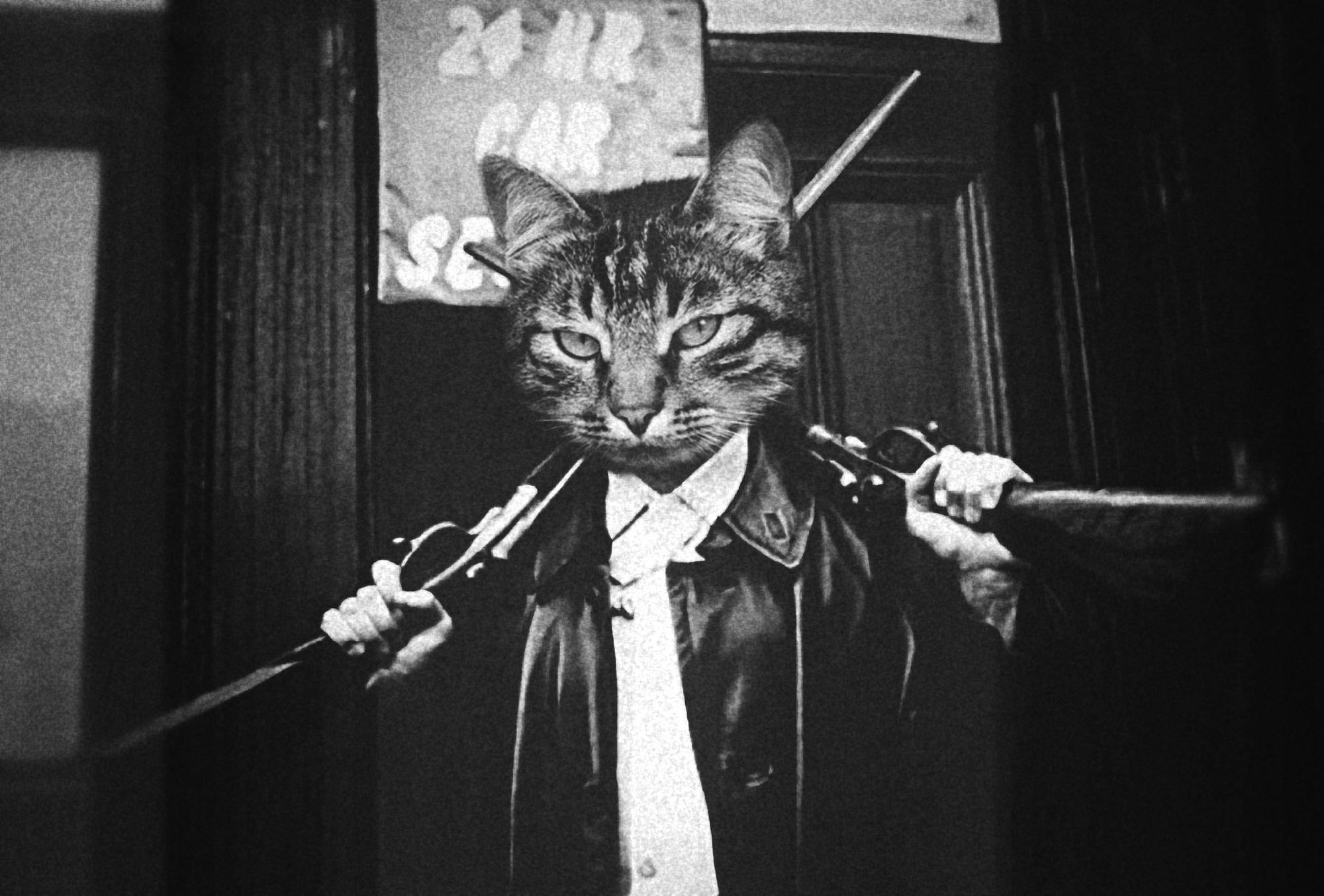 успехов картинки на аву четких котов следует