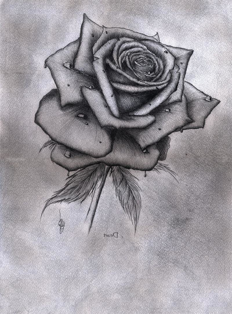 Черно, красивые цветы рисунок карандашом