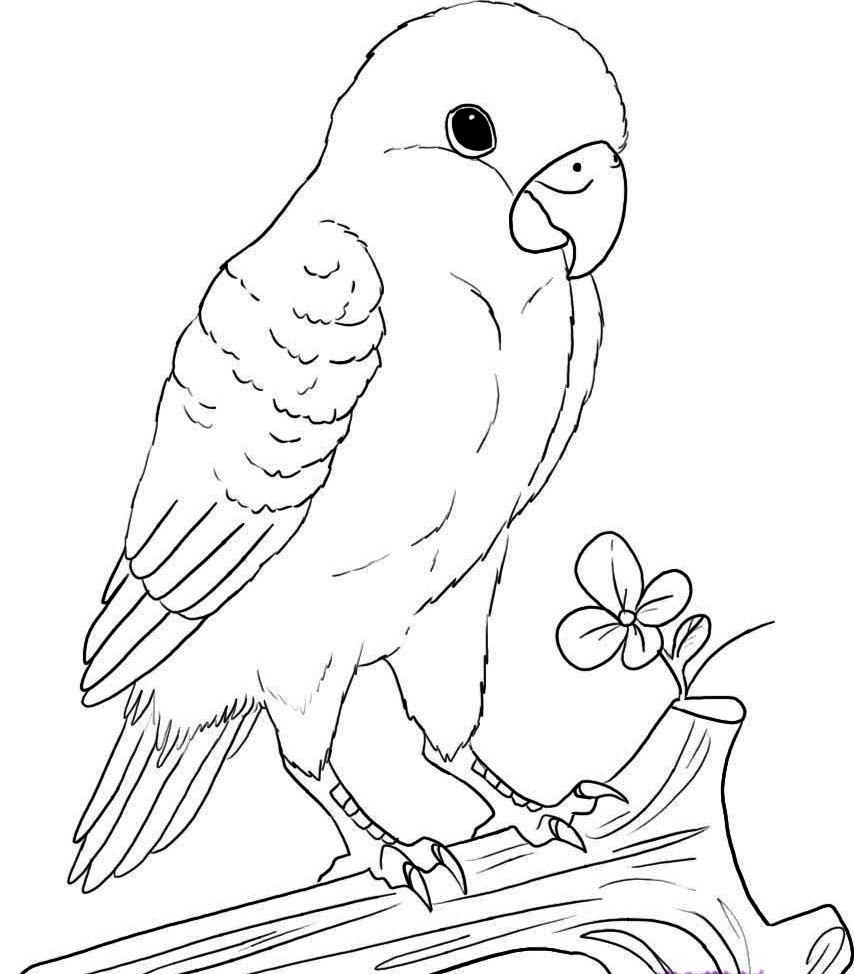 Картинки попугая легко карандашом