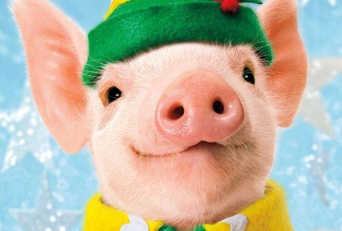 Прикольные поздравления с новым годом 2019 свиньи
