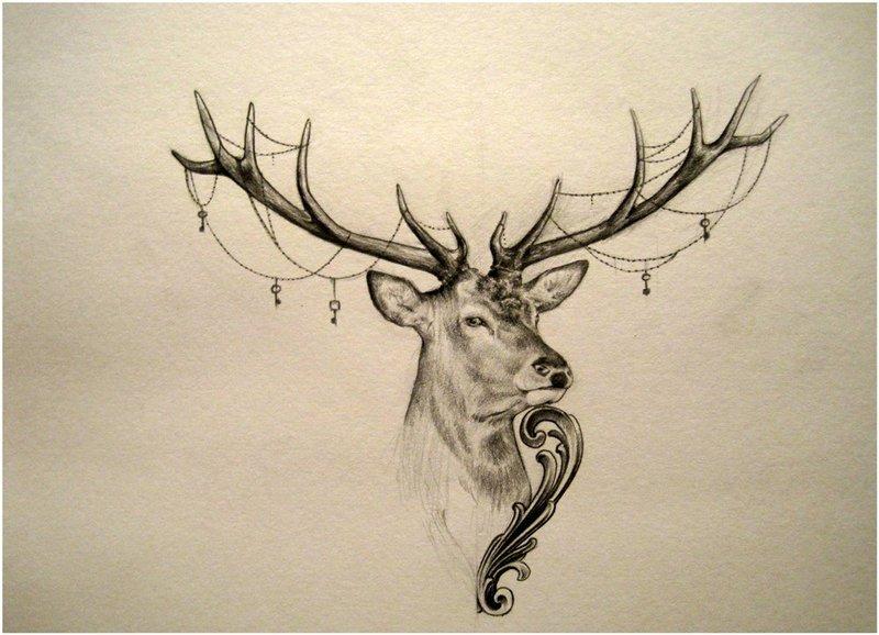 рога оленя картинки рисунки это