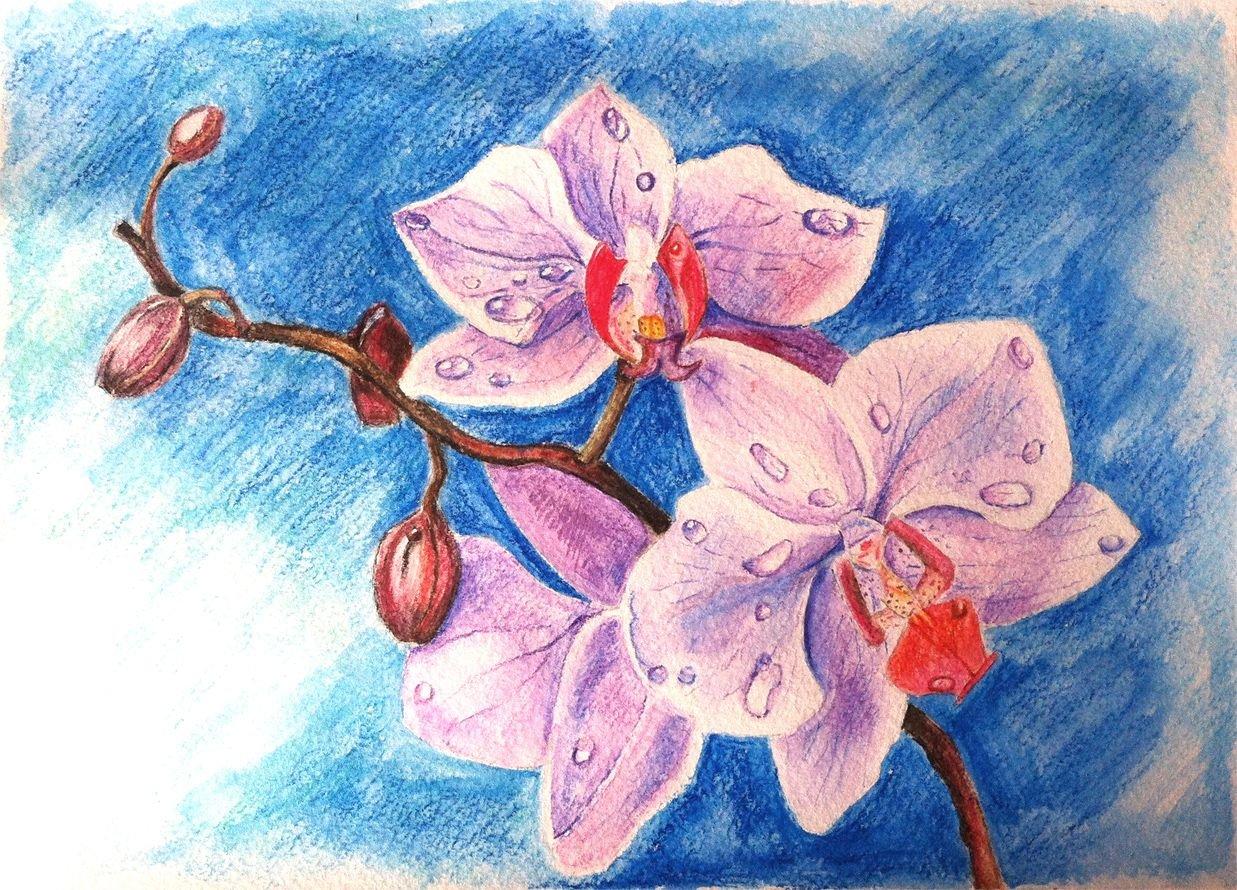 чем орхидеи картинки на бумаге что фотография