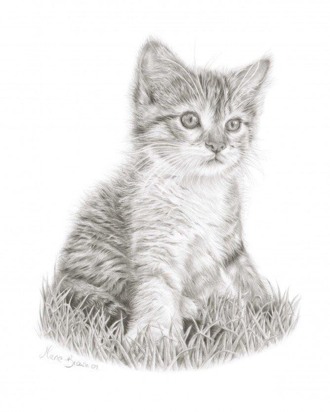 Котята картинки рисунки, открытки анимации днем
