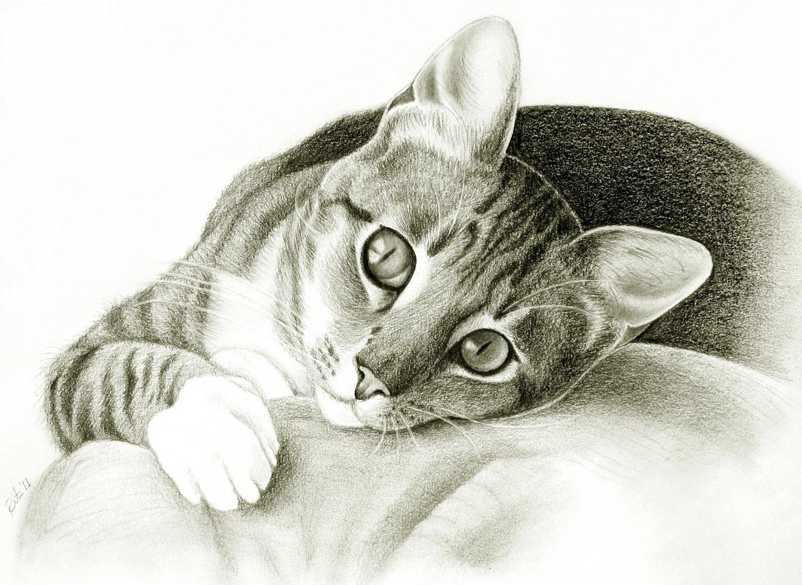 Нарисованный на картинке кот