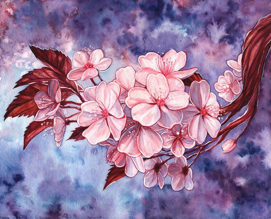 картинки сакура в цвету нарисовать раскрывают