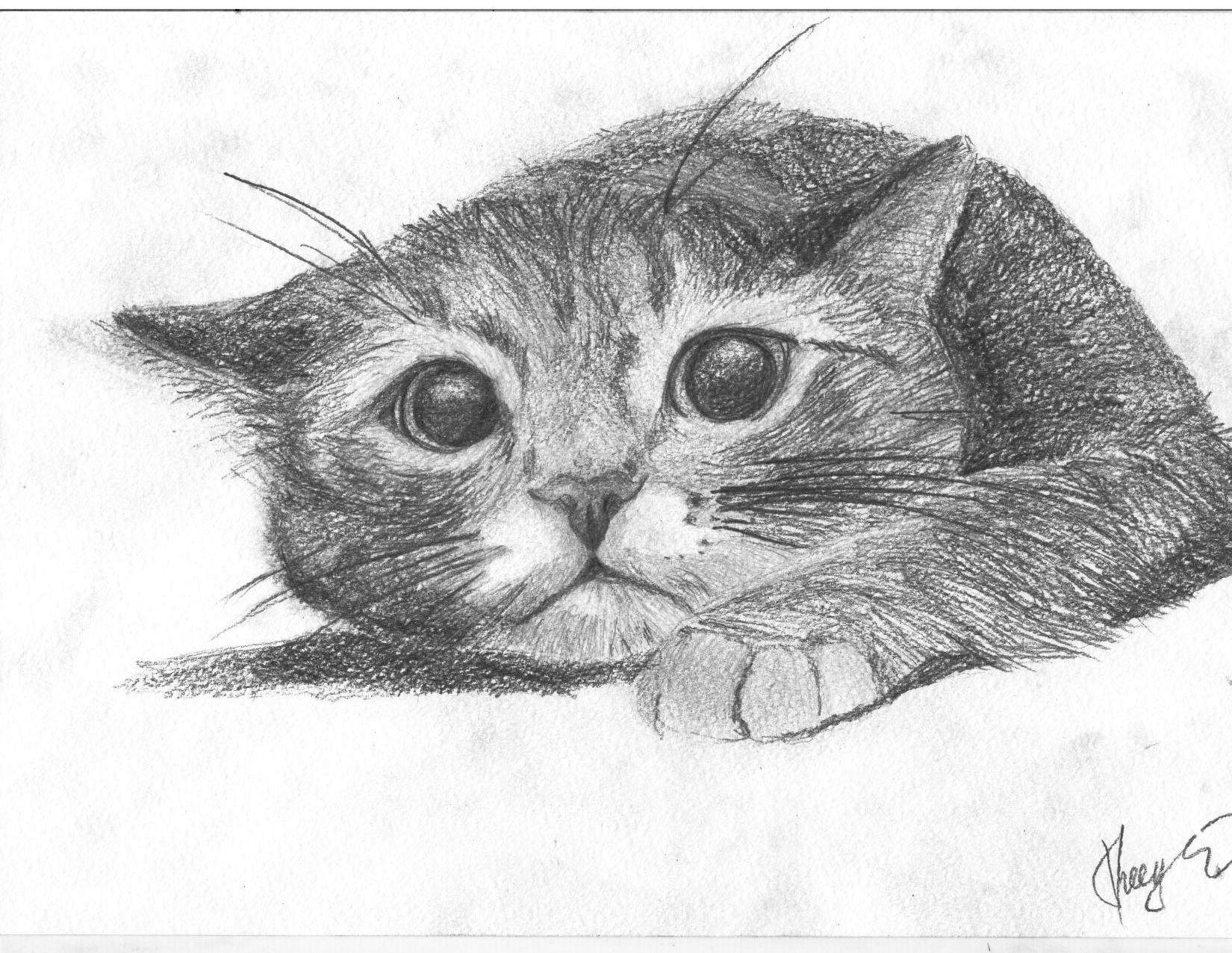 Картинки для срисовки карандашом кошка