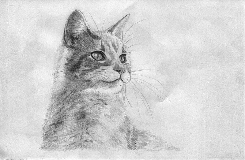 Рисунок карандашом кота