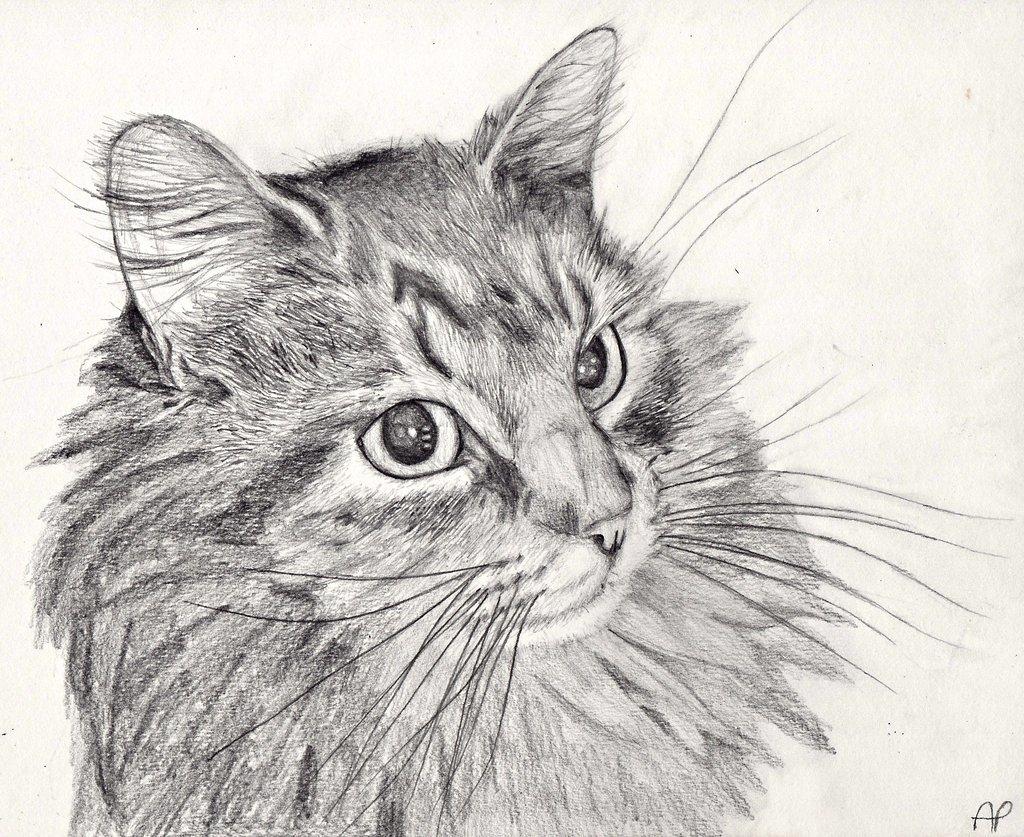 картинки простым карандашом животные котики