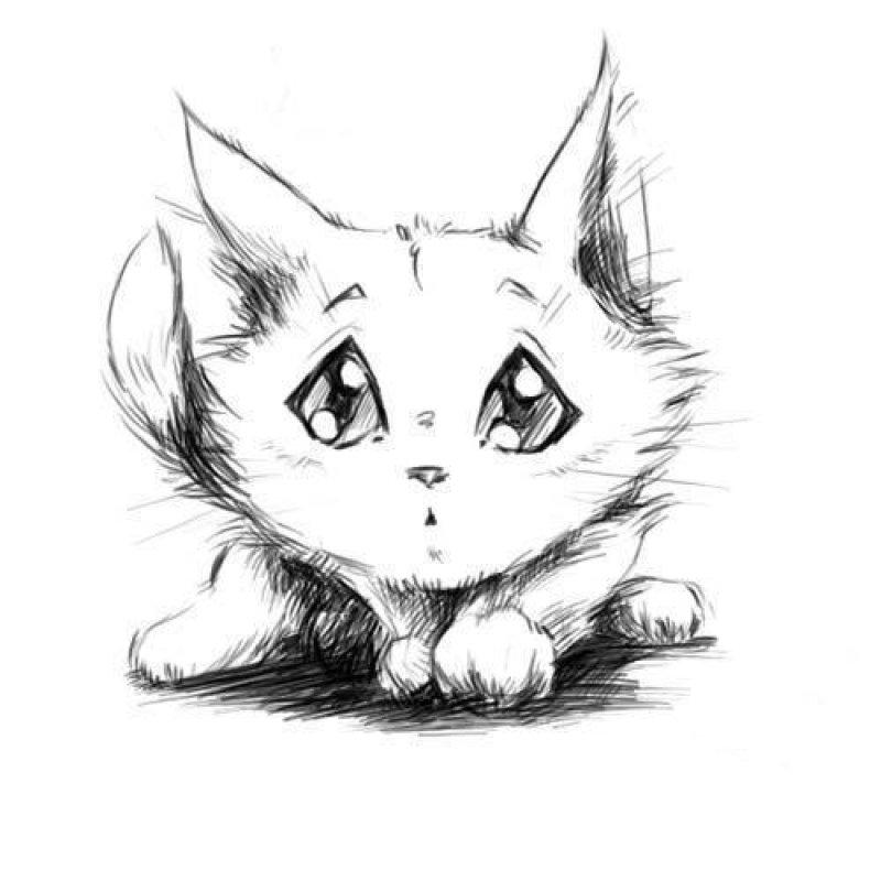 Прикольный рисунок котенка карандашом, года отношений открытки