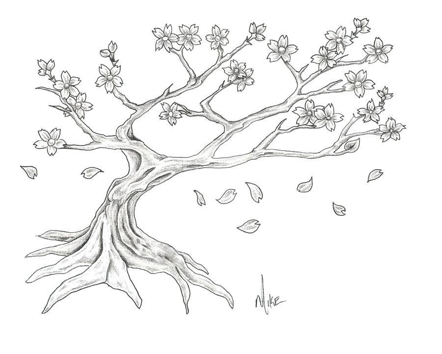 картинки сакура дерево карандашом