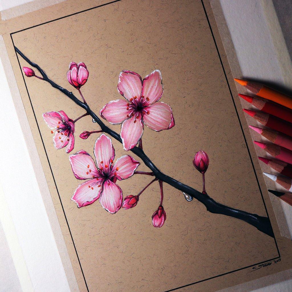 Рисованные картинки сакуры