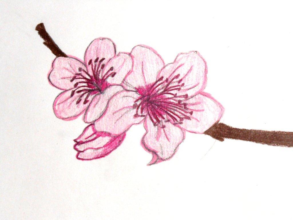 Японские рисунки карандашом для начинающих поэтапно